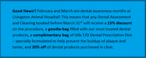 Dental Month Promo